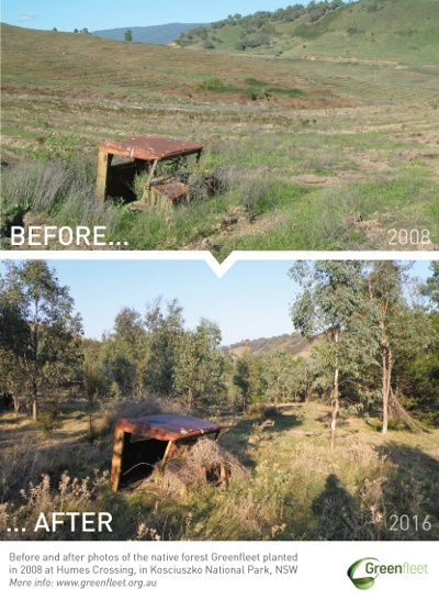 GreenfleetForest_Before-After-HumesCrossing_2008vs2016
